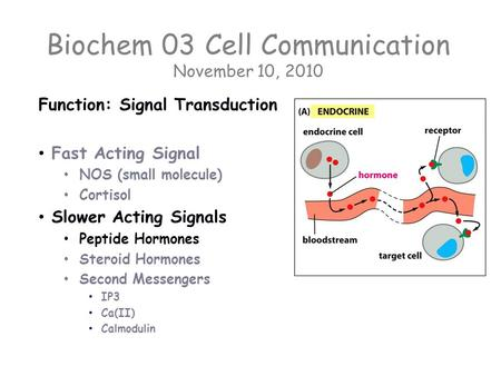 Biochem 03 Cell Communication November 10, 2010 Function: Signal Transduction Fast Acting Signal NOS (small molecule) Cortisol Slower Acting Signals Peptide.