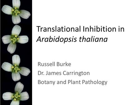 Translational Inhibition in Arabidopsis thaliana Russell Burke Dr. James Carrington Botany and Plant Pathology.