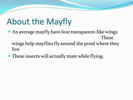 About the Mayfly An average mayfly have four transparent-like wings. 						 	These wings help mayflies fly around the pond where they live These insects.