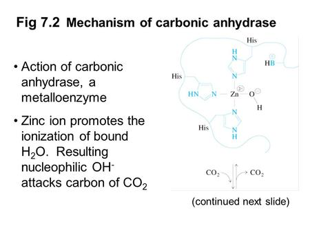 Prentice Hall c2002Chapter 71 Fig 7.2 Mechanism of carbonic anhydrase Action of carbonic anhydrase, a metalloenzyme Zinc ion promotes the ionization of.
