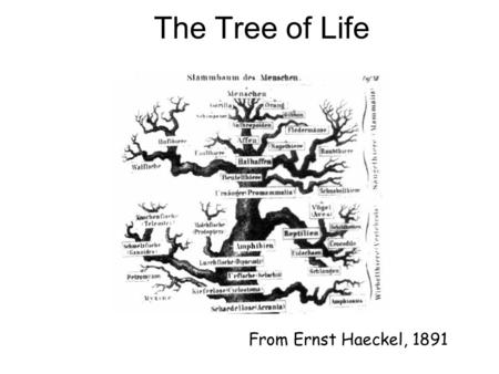 From Ernst Haeckel, 1891 The Tree of Life.  Classical approach considers morphological features  number of legs, lengths of legs, etc.  Modern approach.