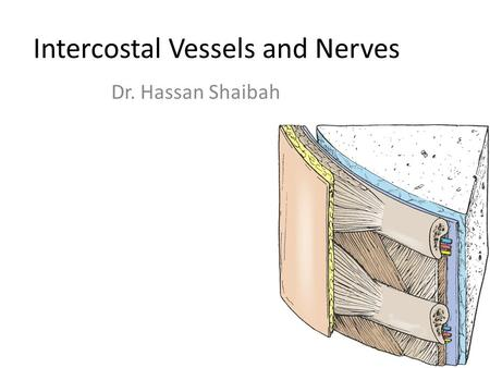 Intercostal Vessels and Nerves Dr. Hassan Shaibah.