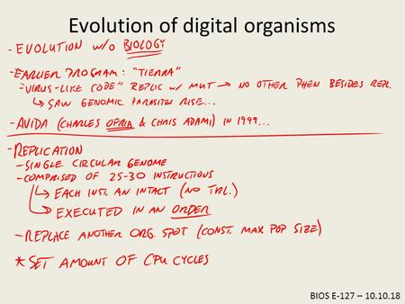 BIOS E-127 – 10.10.18 Evolution of digital organisms.