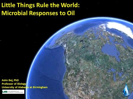 Little Things Rule the World: Microbial Responses to Oil