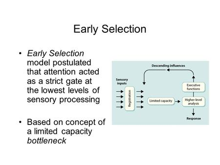 Early Selection Early Selection model postulated that attention acted as a strict gate at the lowest levels of sensory processing Based on concept of a.