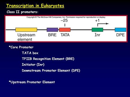 Transcription in Eukaryotes Class II promoters: *Core Promoter TATA box TFIIB Recognition Element (BRE) Initiator (Inr) Downstream Promoter Element (DPE)