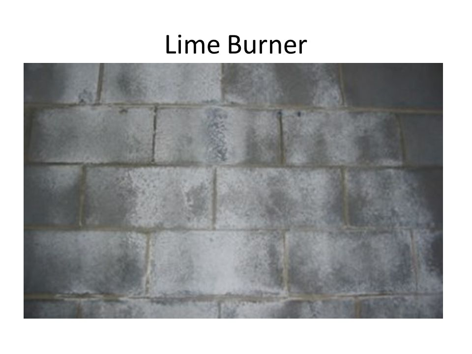 Lime was used for making building mortar, which was in demand for the cathedrals springing up all over the country.