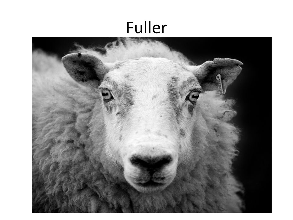The job of a fuller was to make the wool cloth nice and soft and pliableeasy to work with and smooth against the skin.