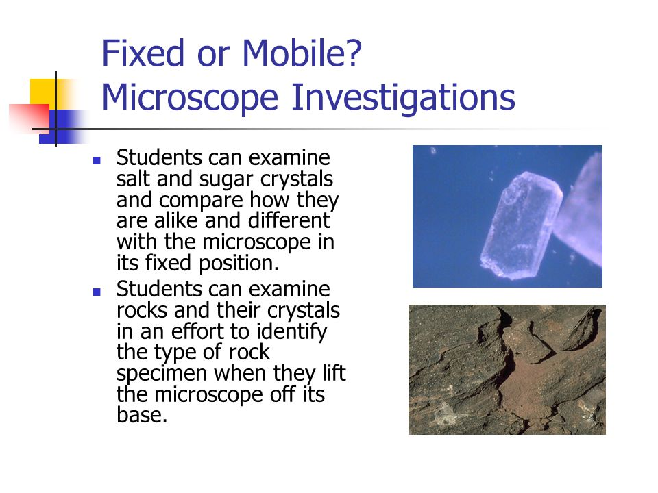 Tool Time A Walking Wonder! Students can take the microscope on field trips!