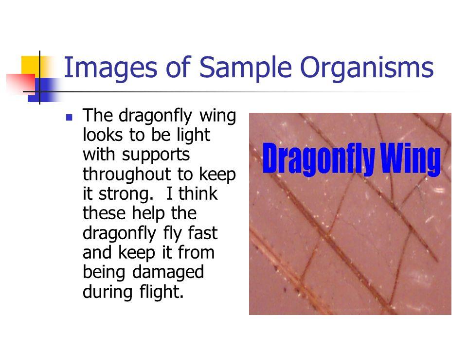 Images of Sample Crystals Sugar crystals have an irregular shape.