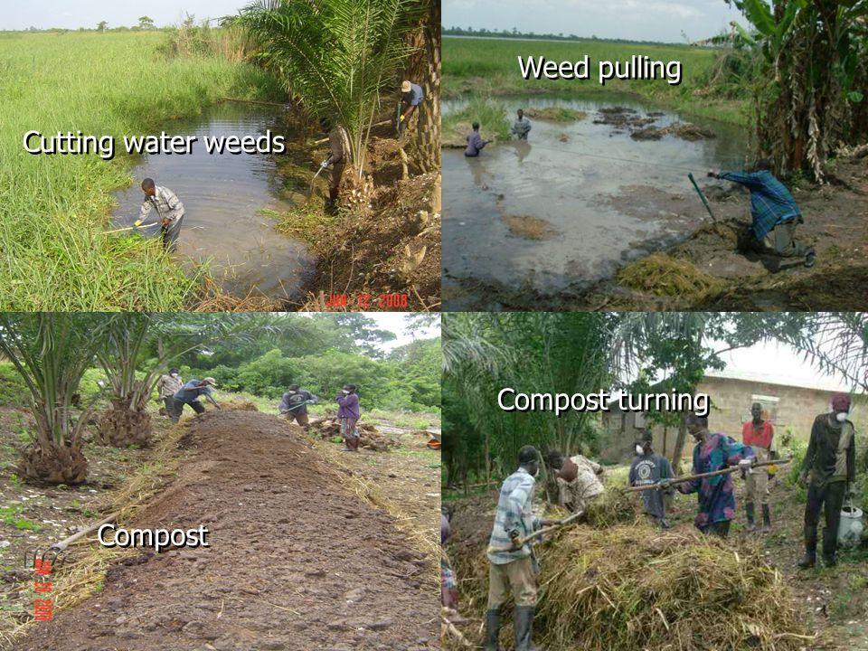 135 bags of Compost of 50 kg each produced Nutrient Acceptable Range Compost Samples pH (H 2 O)7.0 - 7.56.727.36 Total Nitrogen %1.5 - 1.70.911.40 Phosphorus %0.8 - 1.250.820.98 Potassium %0.7 - 1.20.720.74 Calcium %1.5 - 3.00.410.39 Magnesium %0.25 - 0.40.11 Manganese ppm100 - 300377.5186.6 Zinc ppm100 - 200222208 Molybdenum ppm<5.00.310.15