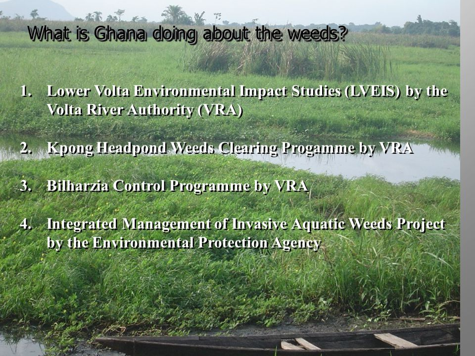 What is Ghana doing about the weeds.4.
