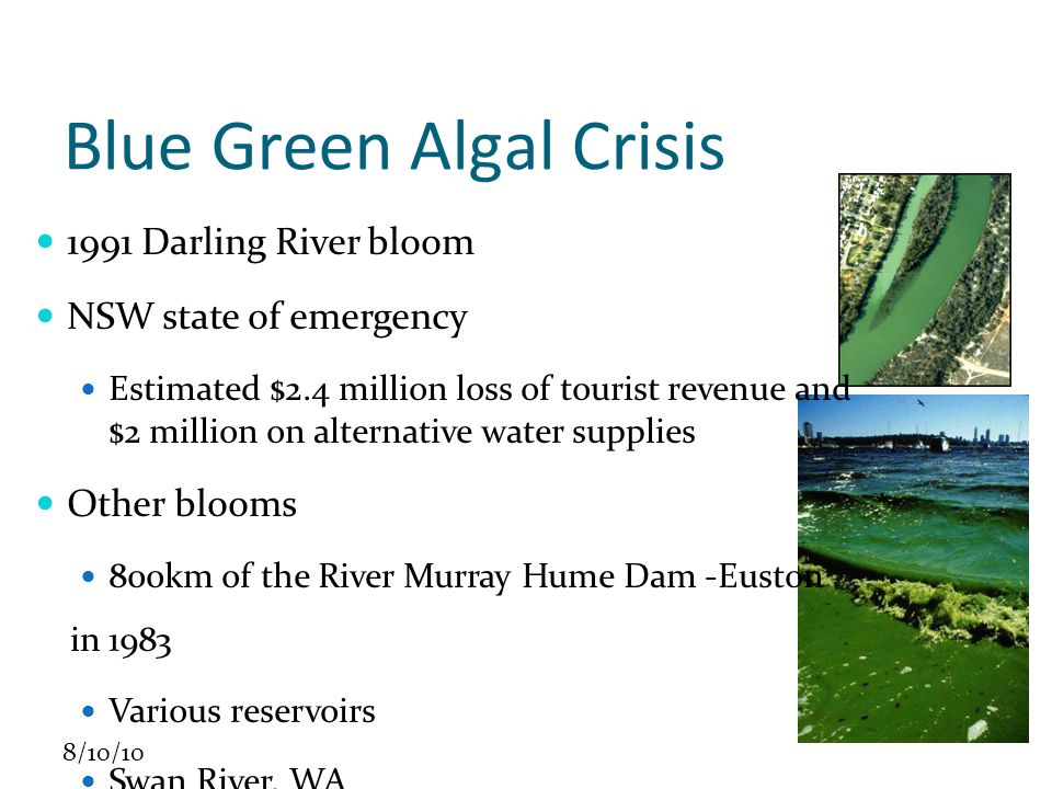 8/10/10 Management Responses Emergency committees MDBC Task Force NSW Blue-Green Algal Task Force Victoria BG Algal Project Team Focus on Identification and Protection Prevention - nutrient reduction, especially phosphorus Science reviews by LWRRDC and MDBC In-principle understanding based largely on northern hemisphere Local processes not well known Flow and turbidity appear correlated but causes not understood