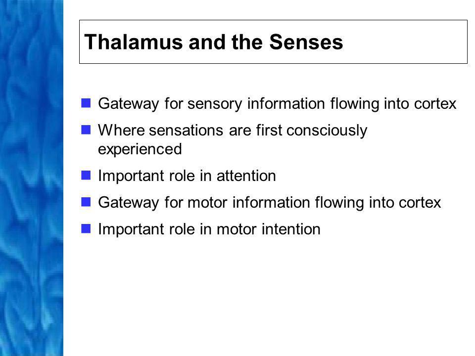 Hypothalamus Maintains constant internal environment Modulates emotional responses with other limbic structures Regulates arousal through action on autonomic nervous system Hypothalamus Pituitary Gland Autonomic Nervous System