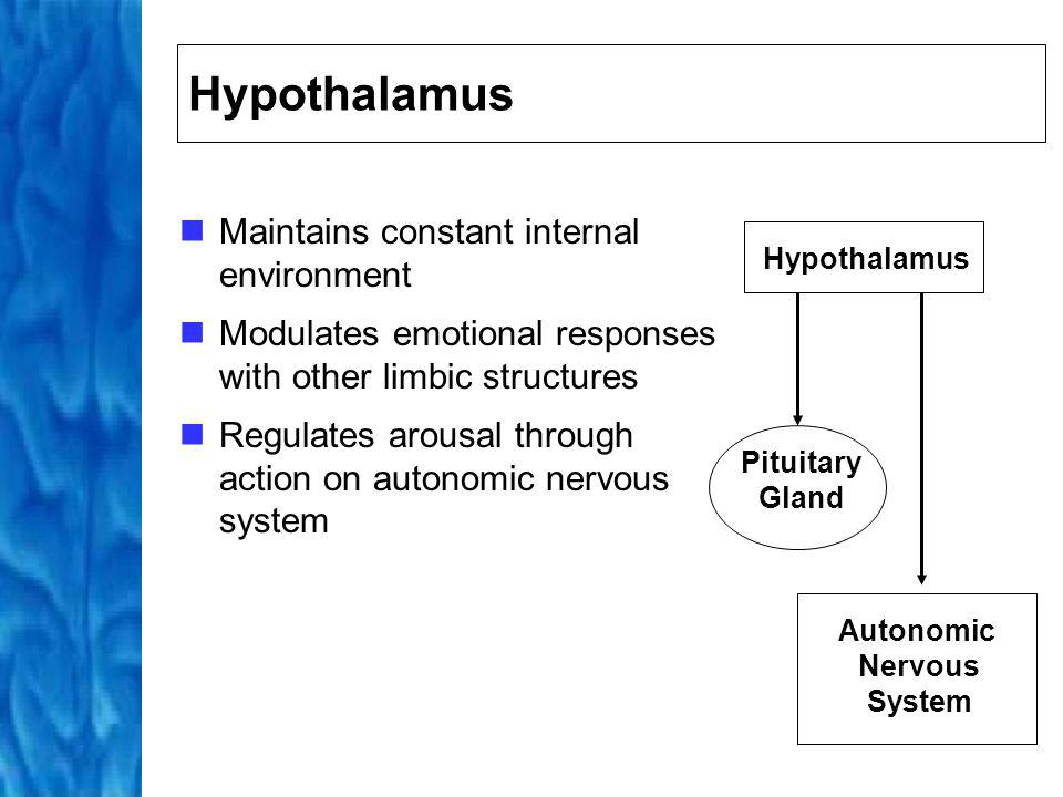 Sympathetic (fight or flight responses): increases heart rate and breathing rate; slows digestion; dilates pupils Parasympathetic (rest and digest responses) nervous systems: decreases heart rate and breathing rate; stimulates digestion