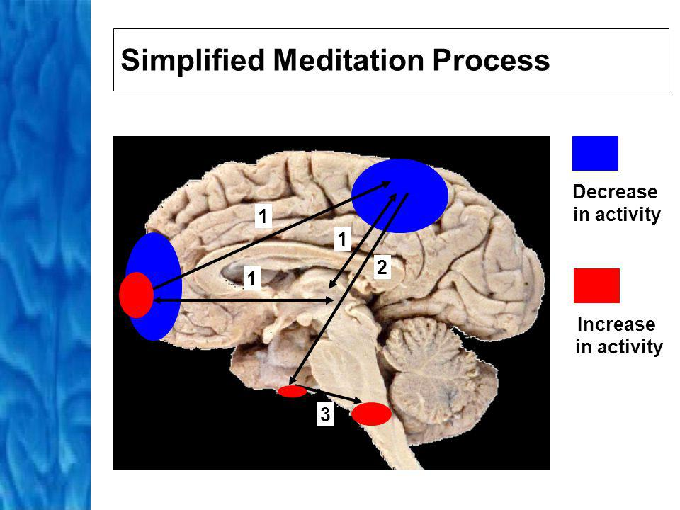 Active Meditation Practitioner begins with intent to clear mind of thoughts Then attention is focused on single object, image, or mantra Attention filters out redundant sensory information and thoughts Activity in occipital and frontal lobes fixes object in practitioners mind