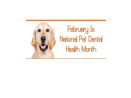 Pets are not brushing or flossing on a daily basis,