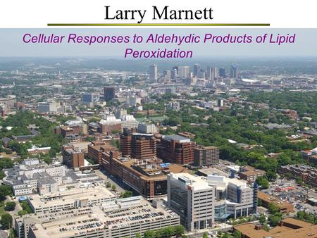 Larry Marnett Cellular Responses to Aldehydic Products of Lipid Peroxidation.