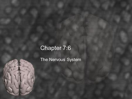 Chapter 7:6 The Nervous System. Key Terms Autonomic Nervous System Brain Central Nervous System Cerebellum Cerebrospinal Fluid Cerebrum Diencephalon Hypothalamus.