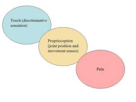 Touch (discriminative sensation) Proprioception (joint position and movement senses) Pain.
