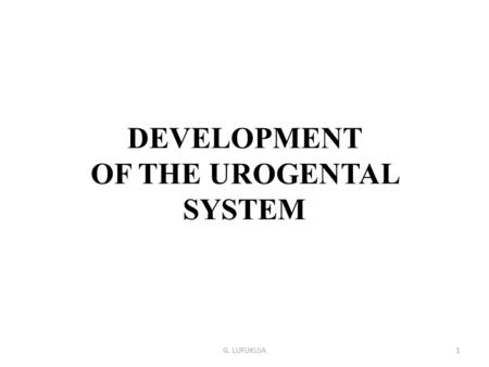 DEVELOPMENT OF THE UROGENTAL SYSTEM