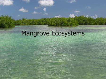 Mangrove Ecosystems. What are Mangroves? Mangroves are plants that grow in tidal areas. The word mangrove can describe a single plant or it can refer.