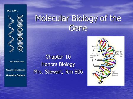 Molecular Biology of the Gene Chapter 10 Honors Biology Mrs. Stewart, Rm 806.