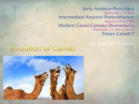 Evolution of Camels Early Ancestor-Protylopus