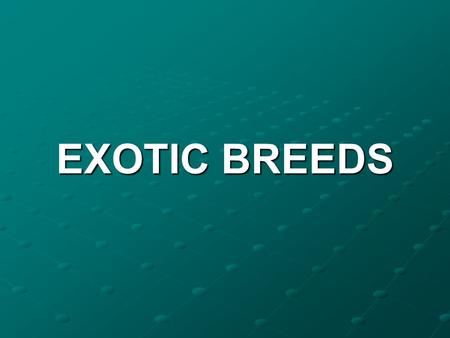EXOTIC BREEDS.