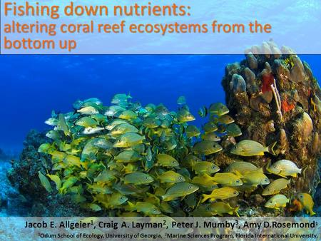 Fishing down nutrients: altering coral reef ecosystems from the bottom up Jacob E. Allgeier 1, Craig A. Layman 2, Peter J. Mumby 3, Amy D.Rosemond 1 1.