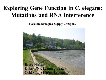 Exploring Gene Function in C. elegans: Mutations and RNA Interference