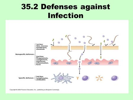 35.2 Defenses against Infection