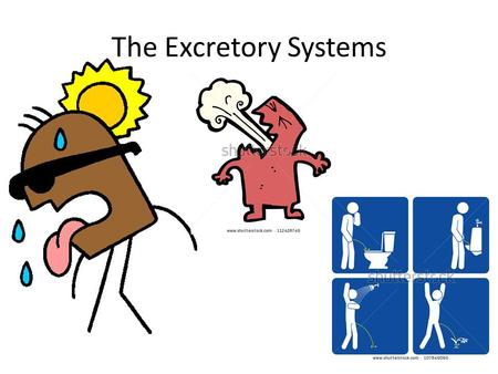 The Excretory Systems. As your body performs chemical activities to keep you alive, waste products, such as carbon dioxide and ammonia, are made These.