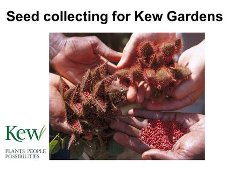 Seed collecting for Kew Gardens. Collecting in the field Kew scientists travel to many different countries to collect seed. This seed will be 'banked'