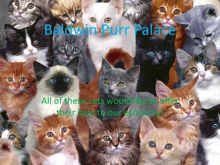 Baldwin Purr Palace All of these cats would like to offer their help to our economy!
