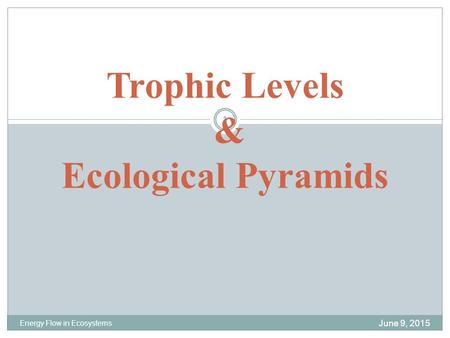 Trophic Levels & Ecological Pyramids June 9, 2015 Energy Flow in Ecosystems 1.