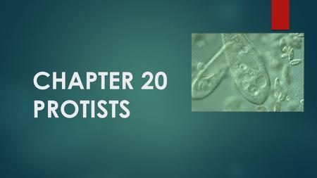 CHAPTER 20 PROTISTS.