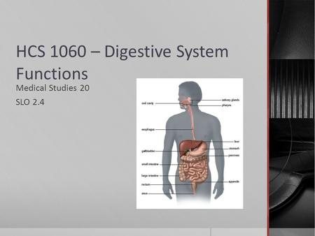 HCS 1060 – Digestive System Functions Medical Studies 20 SLO 2.4.