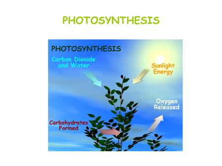 PHOTOSYNTHESIS.