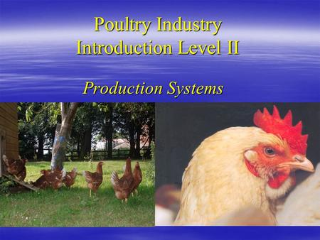 Poultry Industry Introduction Level II Production Systems.