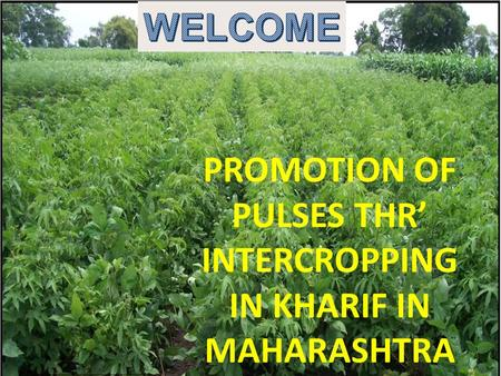 PROMOTION OF PULSES THR' INTERCROPPING IN KHARIF IN MAHARASHTRA.