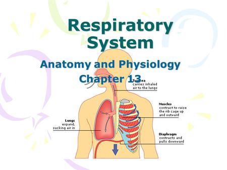 Respiratory System Anatomy and Physiology Chapter 13.