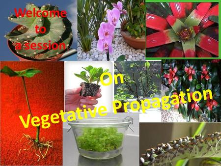 On Vegetative Propagation