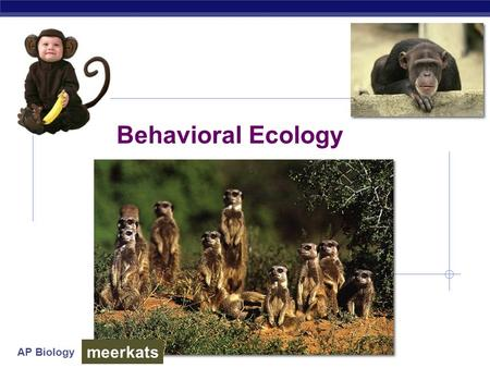 AP Biology Behavioral Ecology meerkats. AP Biology Why study behavior?  Evolutionary perspective…  part of phenotype  acted upon by natural selection.