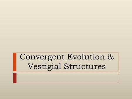 "Convergent Evolution & Vestigial Structures. Convergent Evolution  (Comes from the word ""converge"")  (""come together"" or ""meet"")  Produces unrelated."
