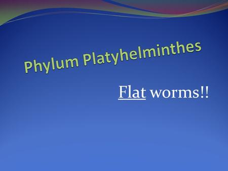 Flat worms!!. Platyhelminthes Flat Worm The Facts … Body symmetry- Bilateral Reproduction- Sexual and Asexual (or regeneration) Movement- Muscular or.
