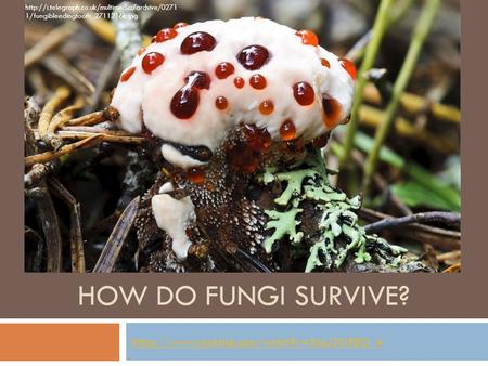 HOW DO FUNGI SURVIVE? https://www.youtube.com/watch?v=3csU3ORBO_A  1/fungibleedingtooth_2711216k.jpg.