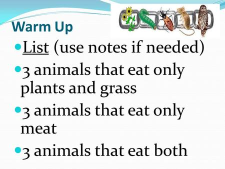 Warm Up List (use notes if needed) 3 animals that eat only plants and grass 3 animals that eat only meat 3 animals that eat both.