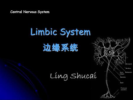 Central Nervous <strong>System</strong> <strong>Limbic</strong> <strong>System</strong> 边缘系统. Introduction.