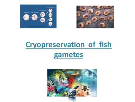 Cryopreservation of fish gametes